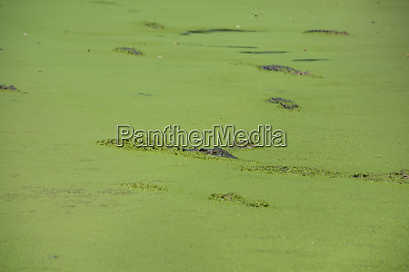 western australia broome malcolm douglas crocodile