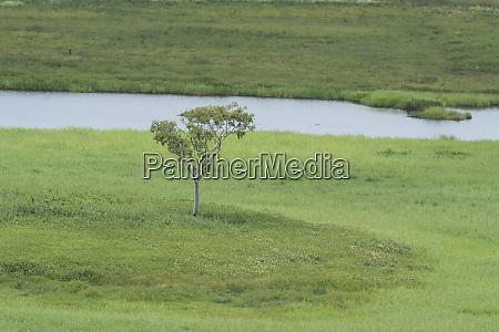 australia winnellie window on the wetlands