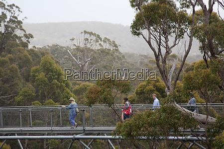 tourists enjoy valley of giants treetop