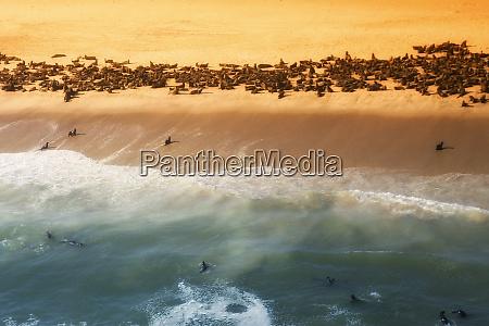 skelettküste, namibia., abstrakte, ansicht, einer, kolonie, von - 27746320
