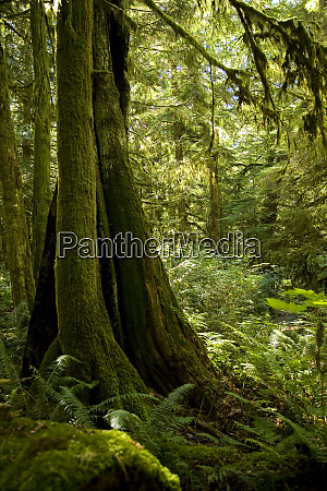 temperate rain forest gibsons bc canada