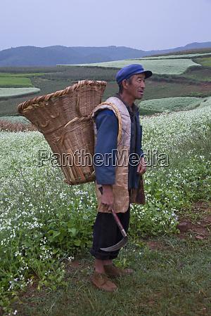 farm worker with basket on shoulder