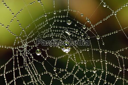 tau bedeckt spinnennetz