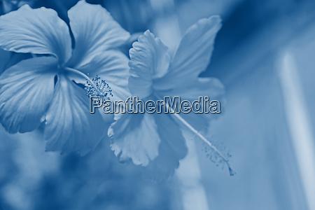 hibiskus blume makro bluete kopierraum copyspace