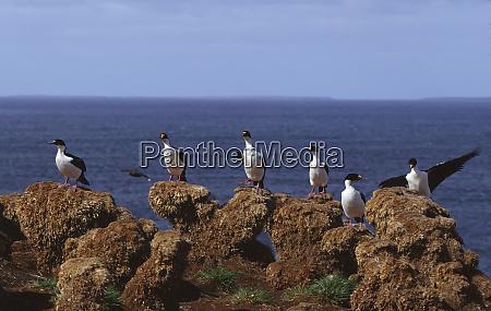 atlantic ocean falkland islands a group