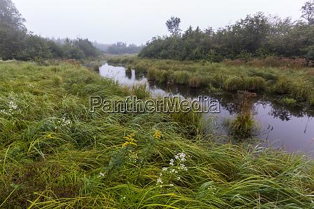 wetlands reed plantation reed maine