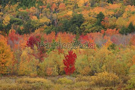 usa maine acadia national park fall