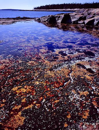 acadia national park maine usa tide