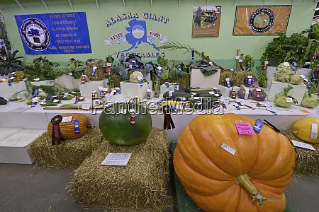 alaska state fair food produce vegetables