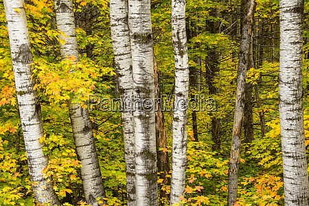 usa michigan upper peninsula fall colors