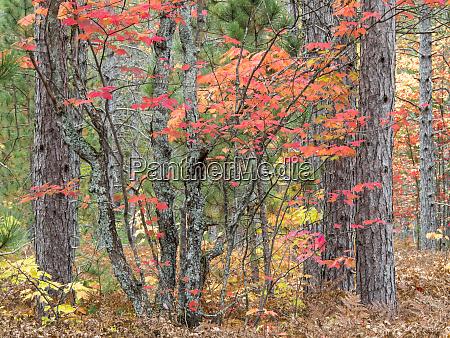 usa michigan upper peninsula fall foliage