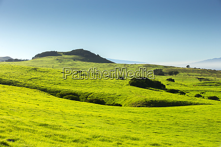 green grasses of the northern kohala