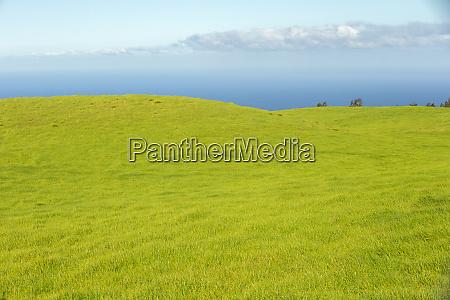 grüne, gräser, der, nördlichen, kohala-bergseite, big, island, hawaii - 27813994