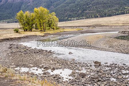yellowstone national park wyoming usa scenic