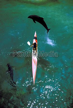 usa hawaii delfinspringt ueber seekajak