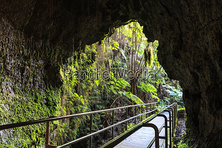 thurston lava tube trail hawaii volcanoes