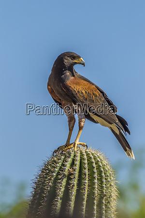 usa arizona arizona sonora desert museum