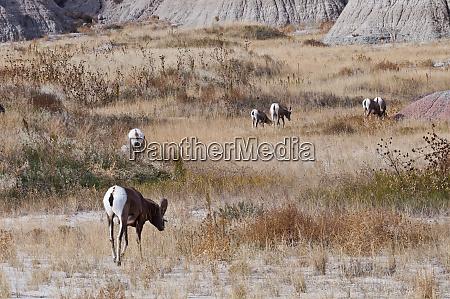 usa south dakota the wall badlands