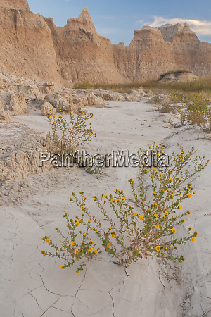usa south dakota arid field in