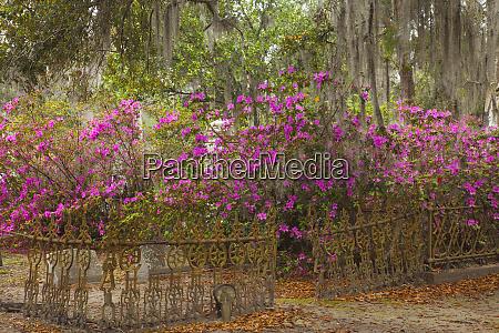 usa georgia savannah historic bonaventure cemetery