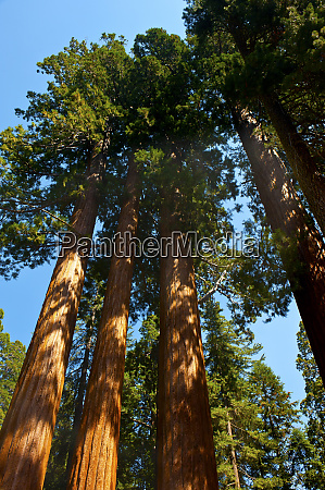 usa california sequoia kings canyon national