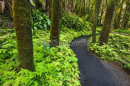 palm jungle trail at hawaii tropical