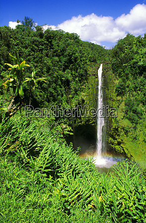 lush vegetation framing akaka falls akaka