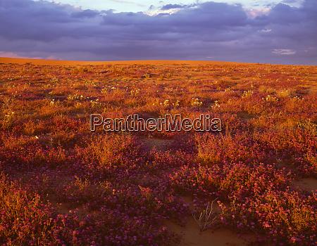 usa california north algodones dunes wilderness