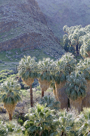 usa california palm springs indian canyons