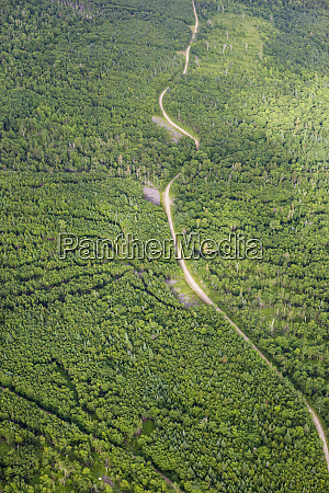 logging roads on coburn mountain in