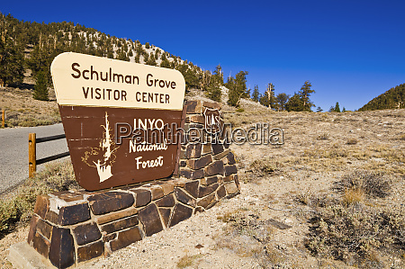 sign at the schulman grove ancient