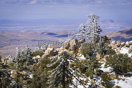 rime ice on pines san bernardino