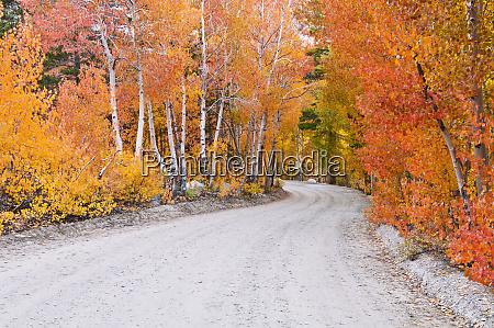 fall color along the north lake