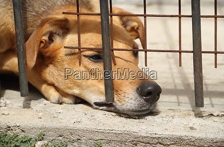 hunde sperrten opfer von tierquaelerei und