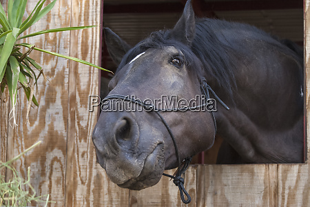 pferd posiert