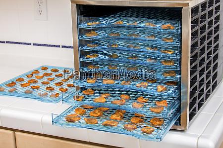 elektrischer dehydrator voller getrockneter aprikosenhaelften pr