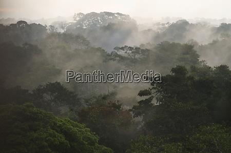 canopy scenic yasuni national park amazon