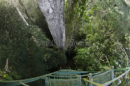 view over rainforest canopy from top