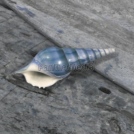 natutical, shell, stillleben. - 27887319