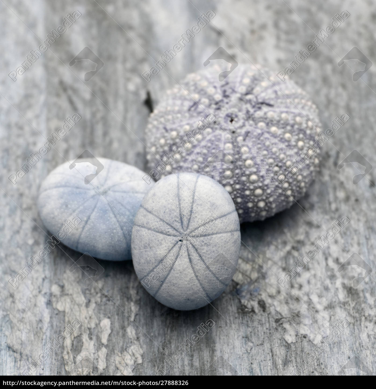 natutical, shell, stillleben. - 27888326