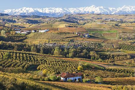 vineyards near alba langhe piedmont or