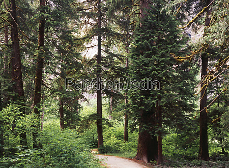 canada british columbia sitka spruce forest