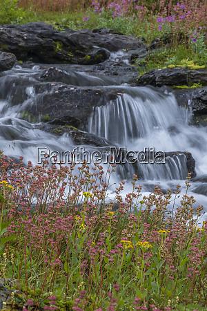 canada british columbia selkirk mountains leatherleaf