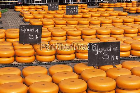 alkmaar cheese market alkmaar netherlands