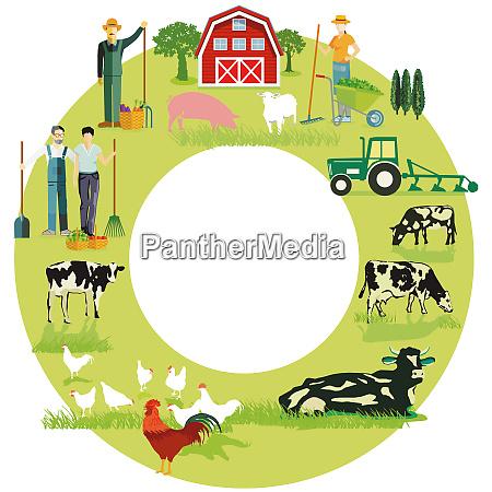 idyllic farm motive with cows on