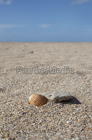 leerer strand mit muschel und kiesel