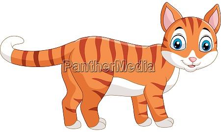 cartoon lustige katze isoliert auf weissem