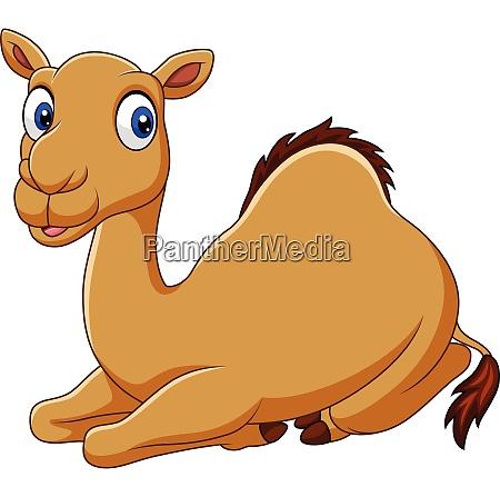 cartoon lustige kamel sitzen