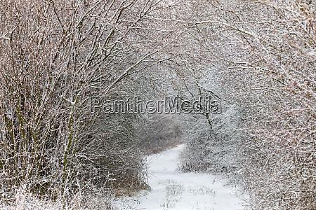 winterlandschaft mit schneefall bedeckt
