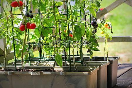 container gemuese gartenarbeit gemuesegarten auf einer